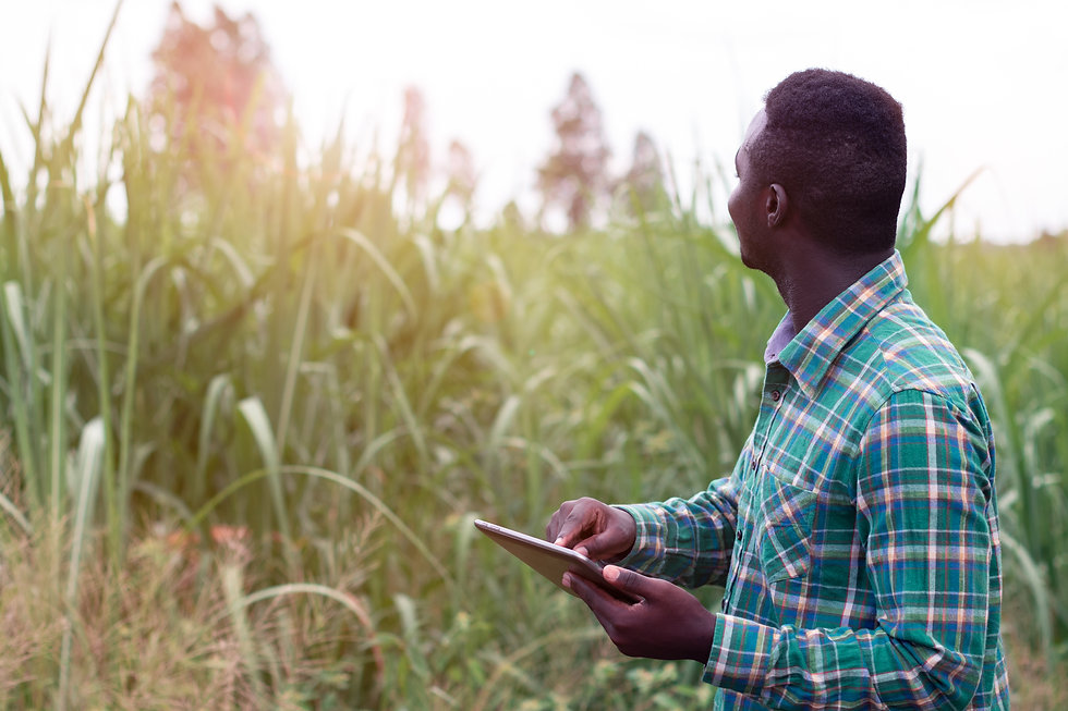 African Farmer  stand in the green farm