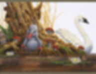 canard et cygne.jpg