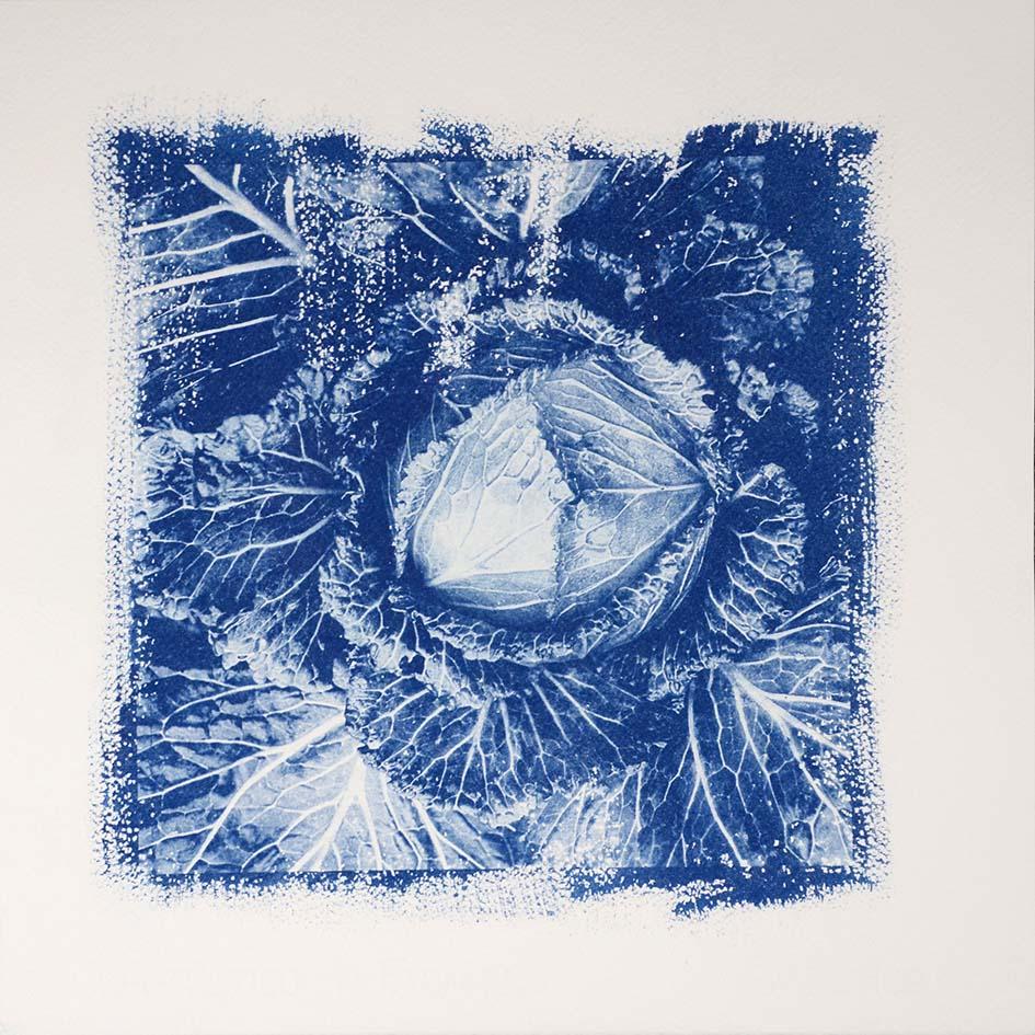 cabbage blue web