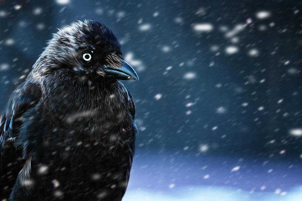 raven-4418514.jpg