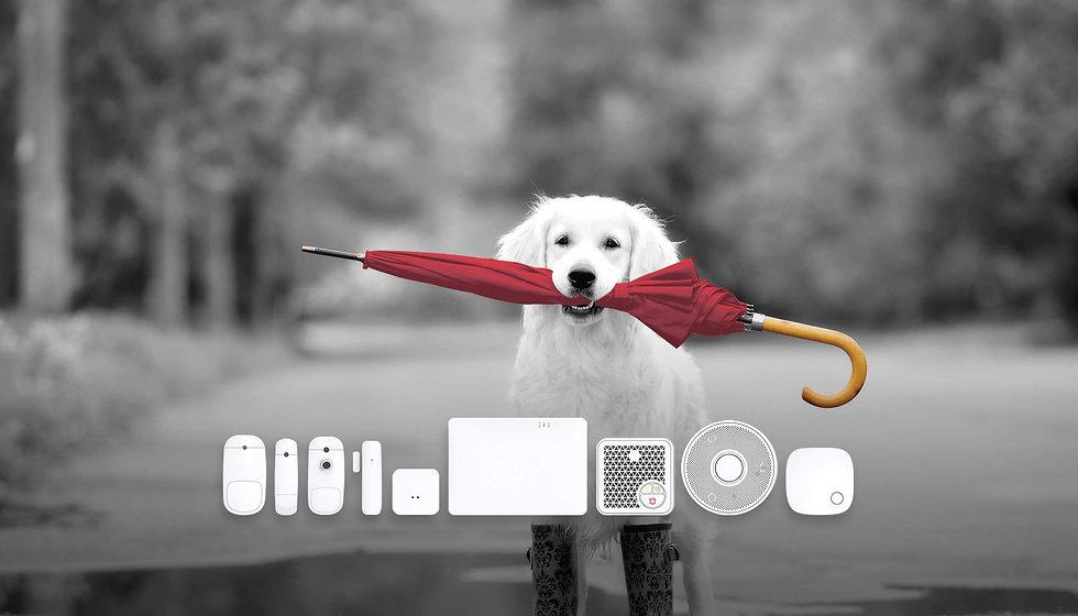 home-page_banner_full-screen_shepherd_V3