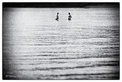 Cheltenham Beach