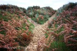 Y Path