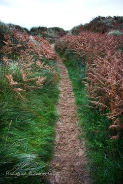 Long Path 1