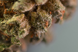 Cannabis_Grow West_Product_Maryland