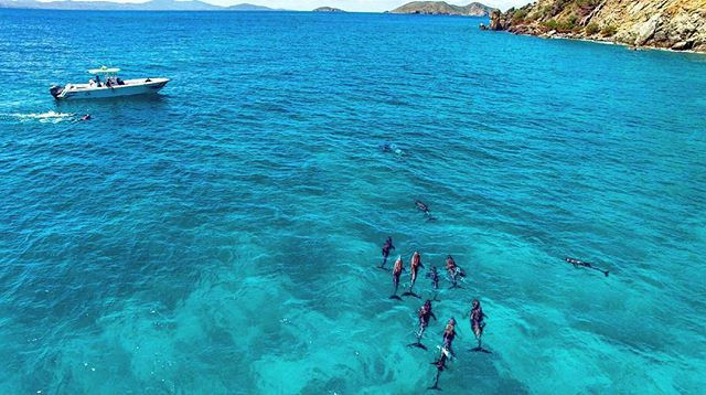 Jost Van Dyke, Swimming with Dolphins