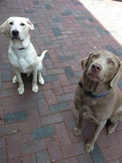Cooper & Milo
