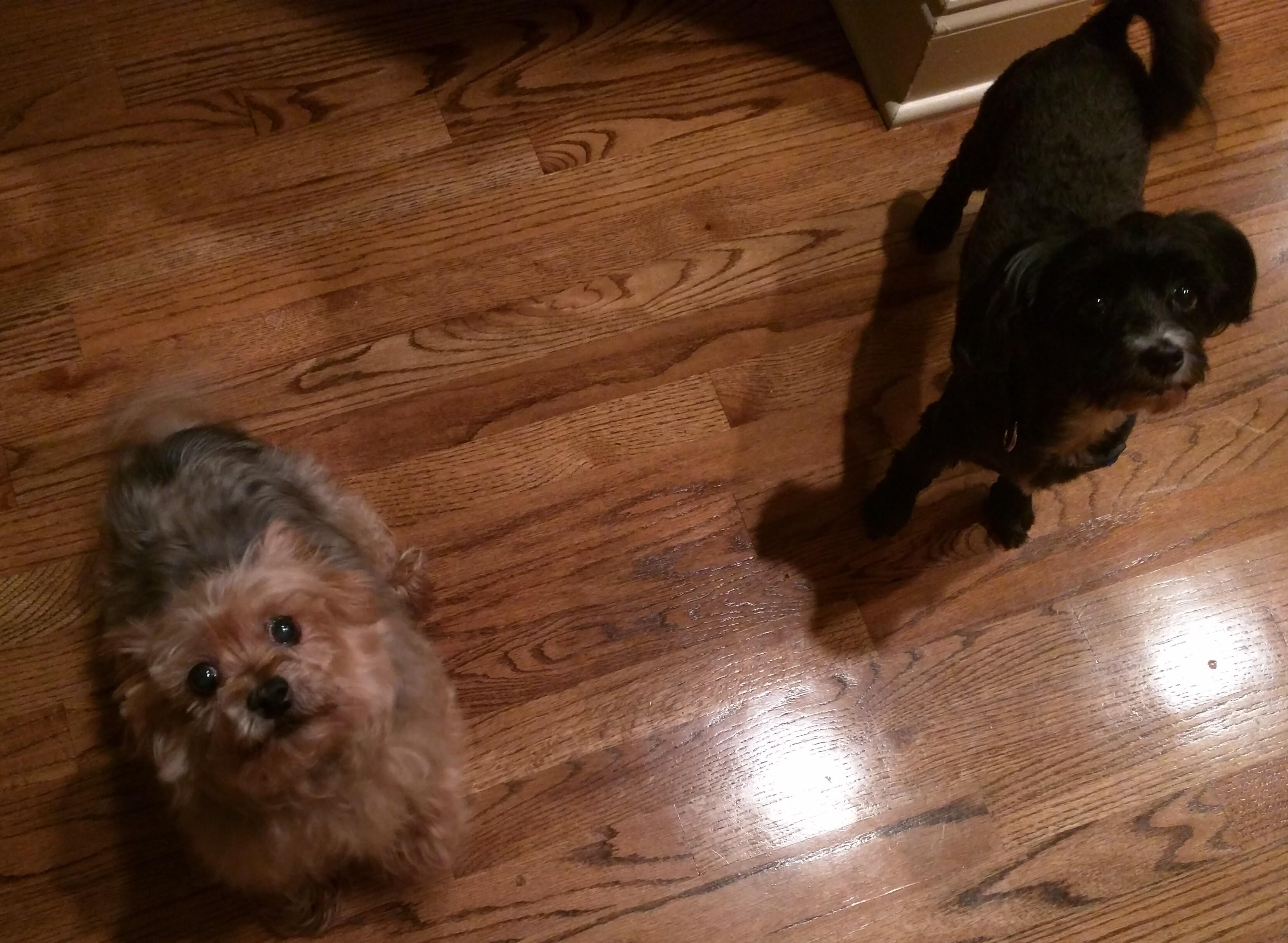 Maggie & Stella