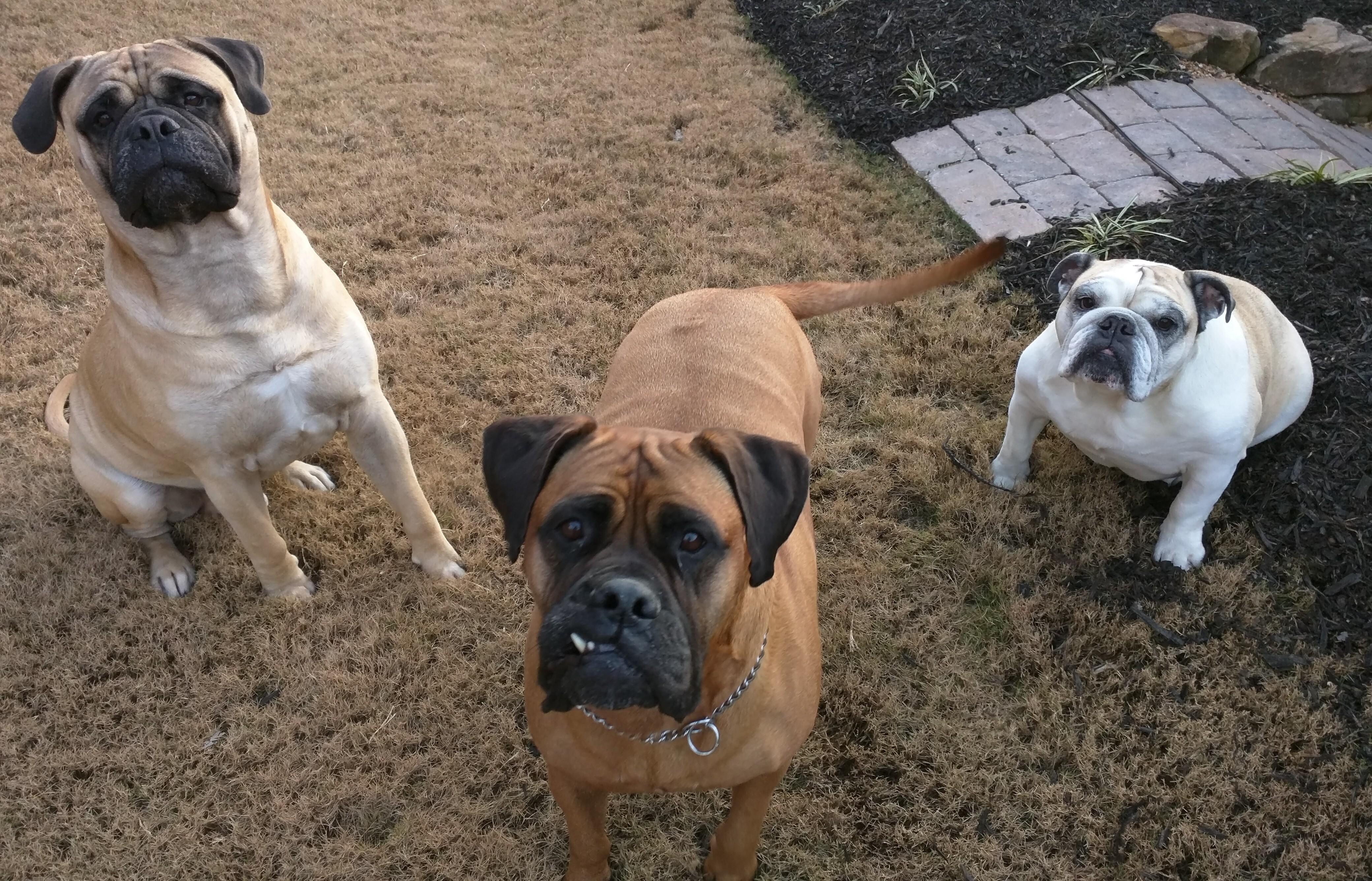 Riley, Bo & Baby