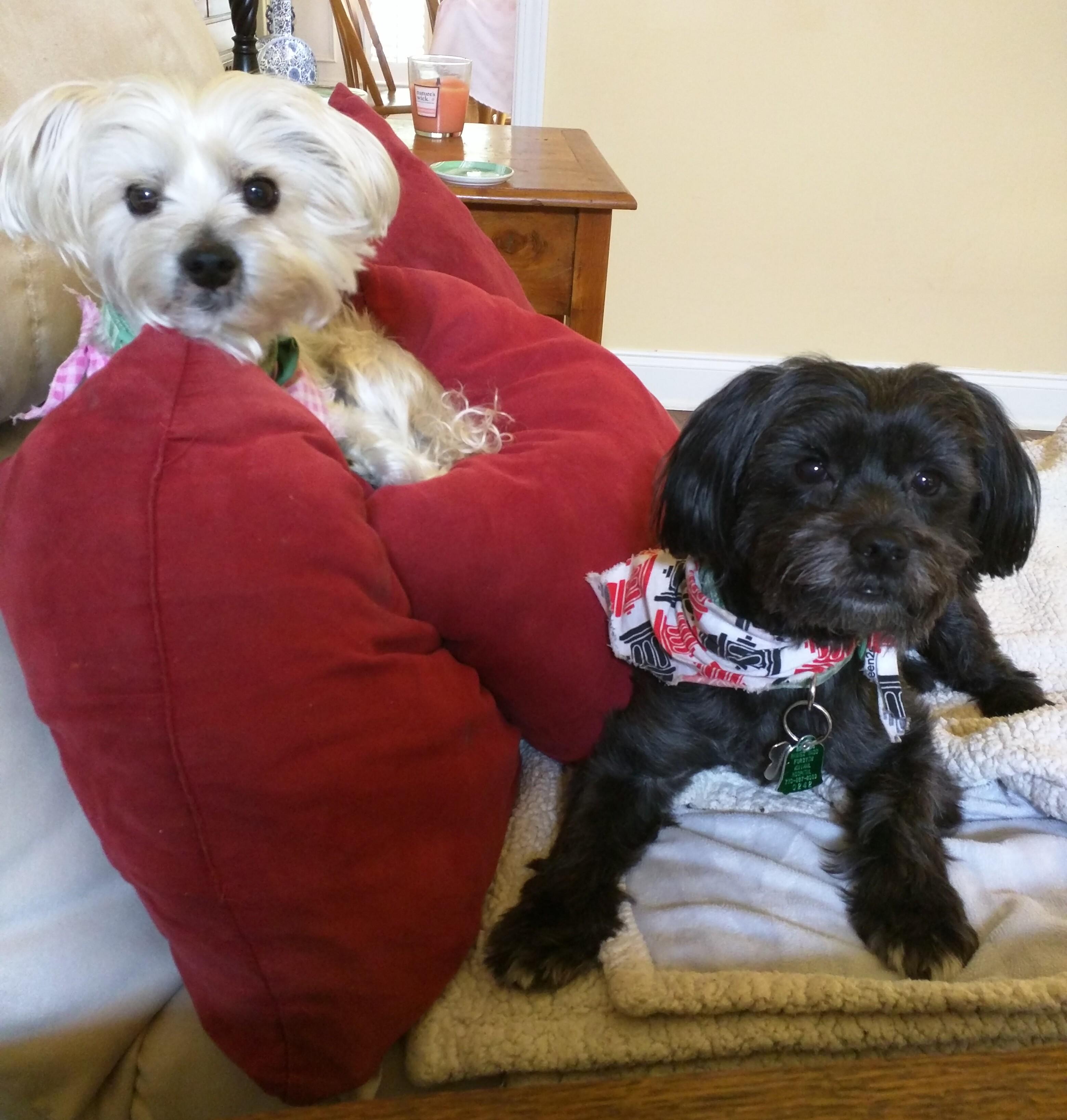 Bailey & JoJo