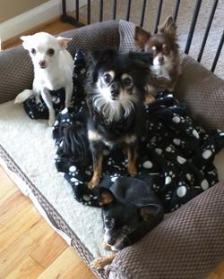 Gigi, Lulu, Pita & Tasha