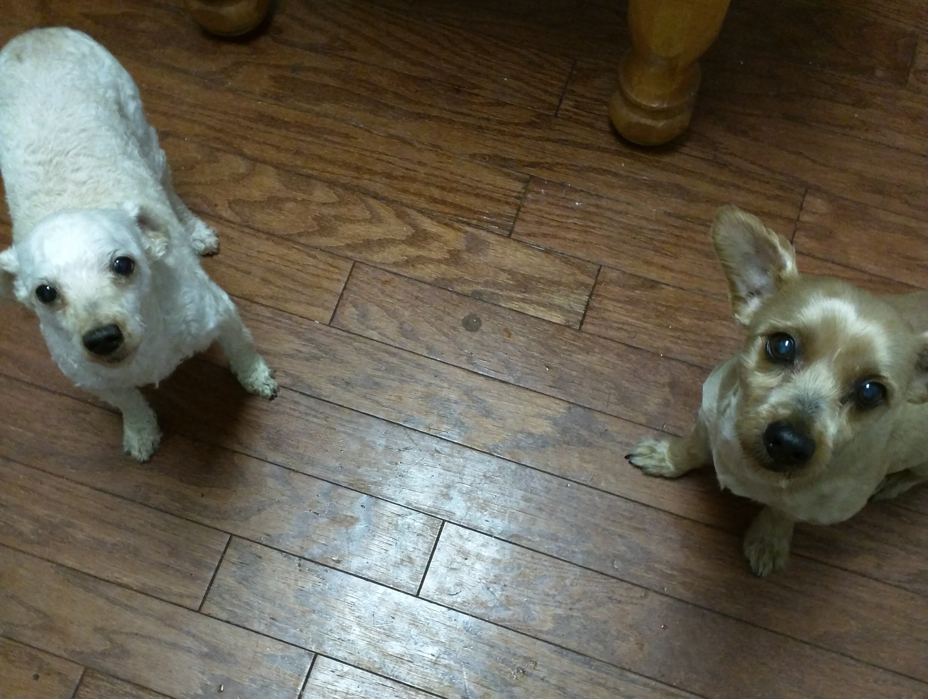 Puma & Yochi
