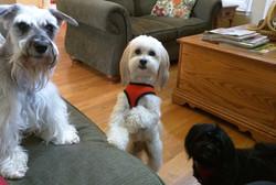 Gracie, Ziva & Lexi