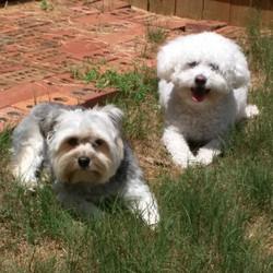 Daisy & Lola