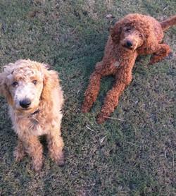 Dexter & Allie