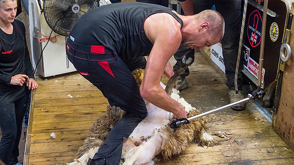 sheep-shearing-record-Rowland-Smith-c-Em