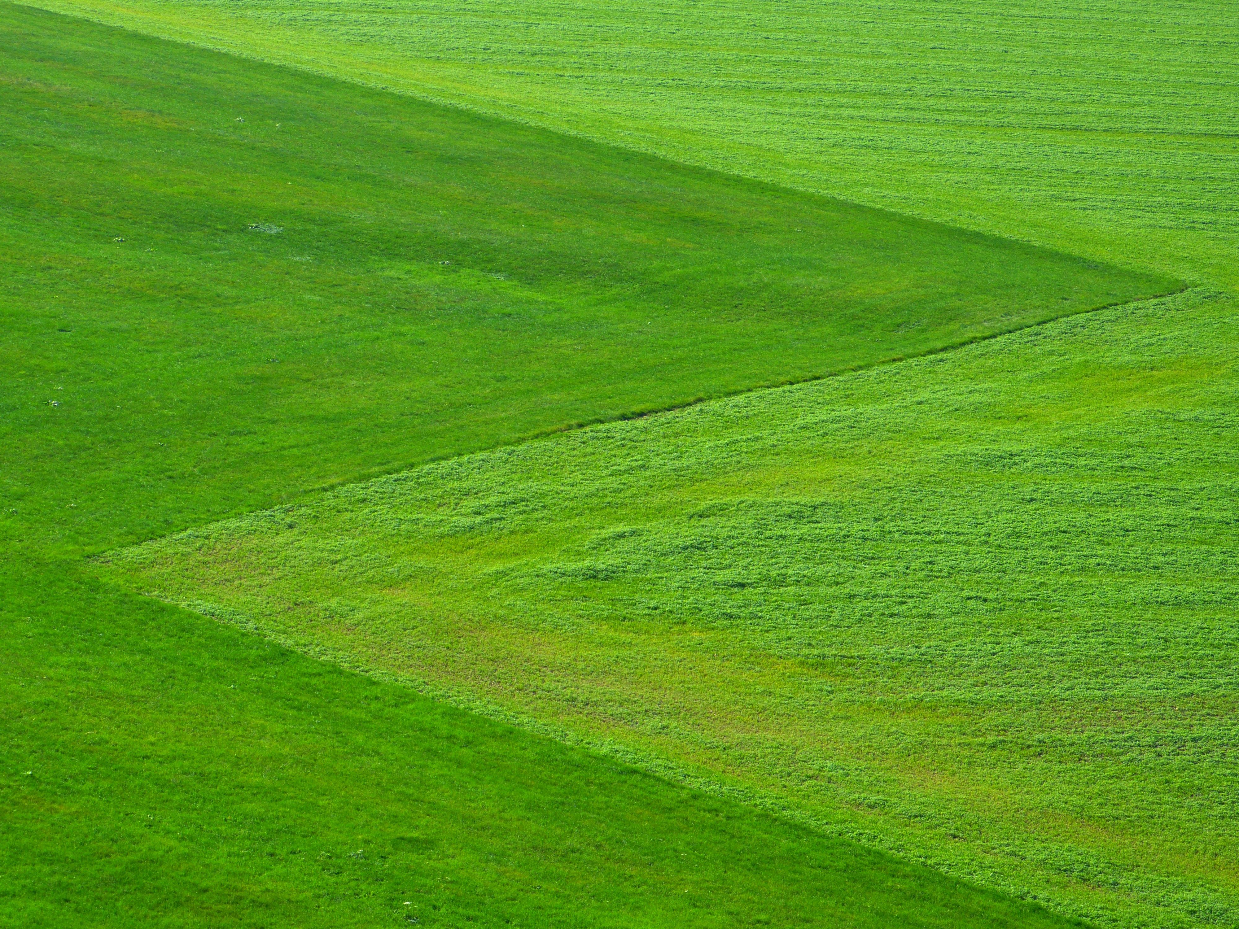 meadow-green-grass-nature-65281
