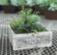 lg jardin box_edited.jpg