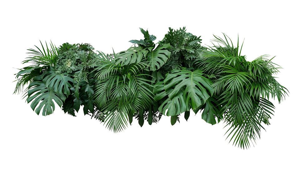 Tropical leaves foliage plant bush flora