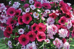 Spring at Timbuk