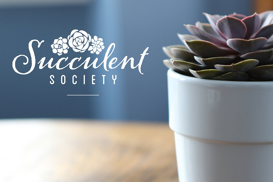 succulentsociety_cover1.jpg