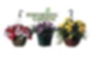 Timbuk Farms Performing Gardens Brand includes Hanging Baskets, Patio Planters and more