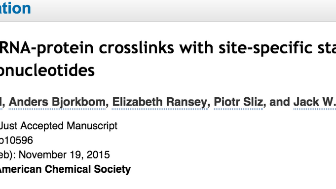 Pinpointing RNA-protein crosslinks with site-specific stable isotope labeled oligonucleotides
