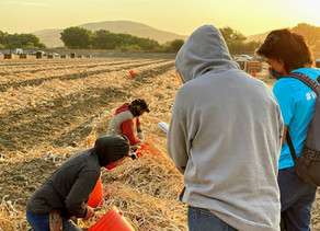 Outreaching to Indigenous Farm Workers