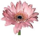 GfK-Blume-i2.jpg