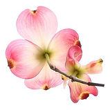 GfK-Blume-k1.jpg