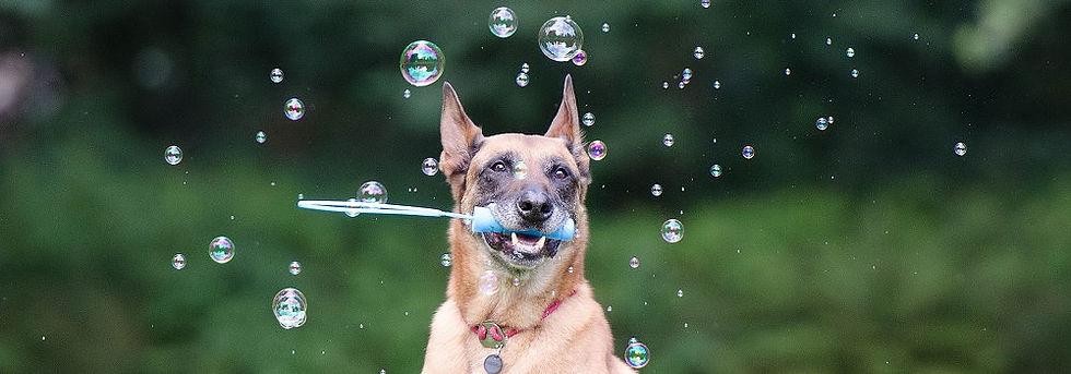 Hundetraining-Verhaltenscoaching.jpg