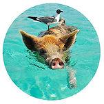 Vierbeiner-Schwein.jpg