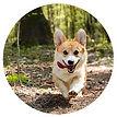 Erlebnispaedagogik-Hund-B.jpg