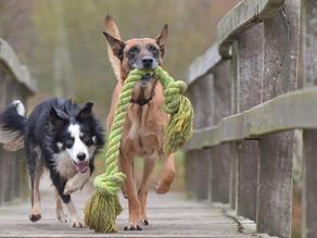 Hunde: Kumpel sind spendabler