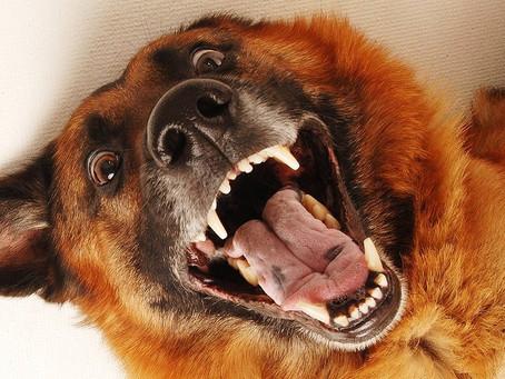 Wie Hunde Begrüßung erleben
