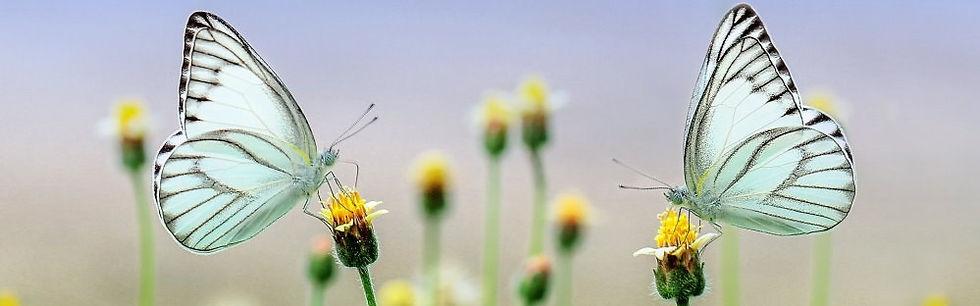 Schmetterlinge1.jpg