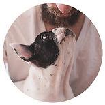 Tiergestuetzte-Arbeit-Intervention-B.jpg