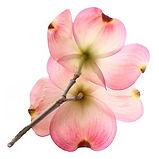 GfK-Blume-k2.jpg