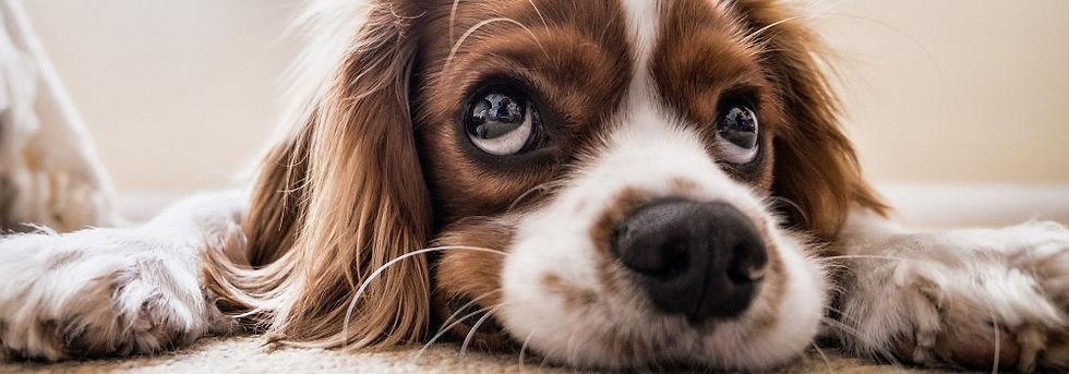 Vierbeiner-Hund.jpg