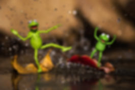 Kermit and Robin floating on leaves in a puddle