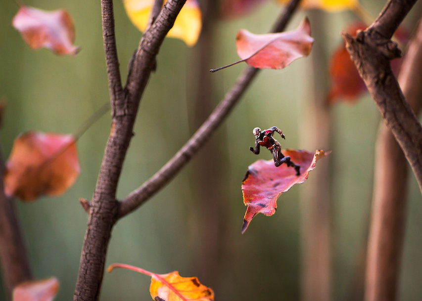 Antman Falling Leaves.jpg