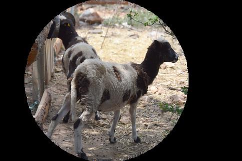 2018-06-25 Sortie au Parc animalie de Ginasservis fils de Marie-Ange (22) copie.png