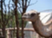 2018-06-25 Sortie au Parc animalie de Gi