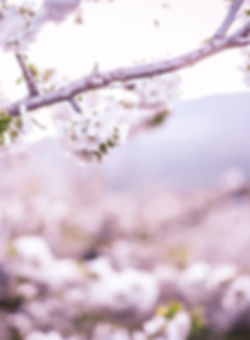 Sakura web-76.jpg