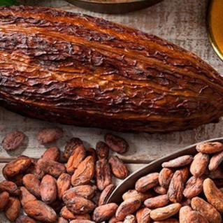 El cacao, uno de los alimentos más populares en el mundo.