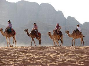 Camel_WadiRum_13-650x487.jpg