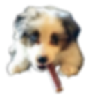 puppybullstick-removebg-preview_edited.p