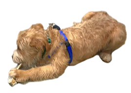 antlerdog-removebg-preview_edited.png