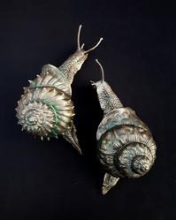 Love Snails.jpg