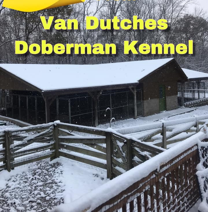 VDD kennel snow.jpg
